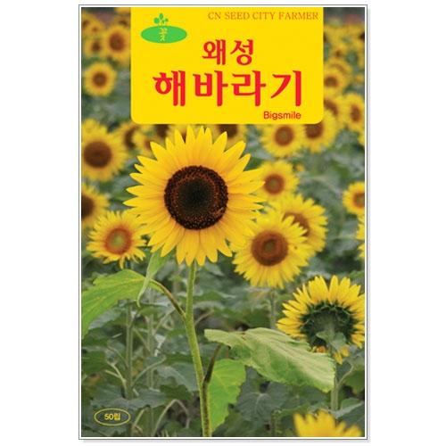 꽃씨 왜성해바라기 50립 - 키작은해바라기