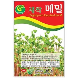 새싹메밀 30g 새싹씨앗