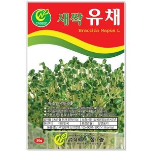새싹유채 30g 새싹씨앗